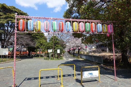 仙台堀川公園桜まつり
