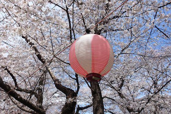 新河岸川 桜 ライトアップ