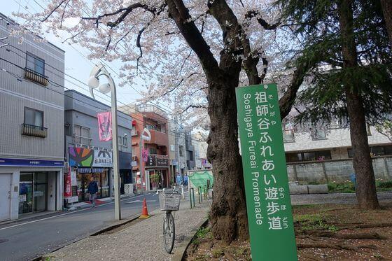 祖師谷ふれあい遊歩道 桜