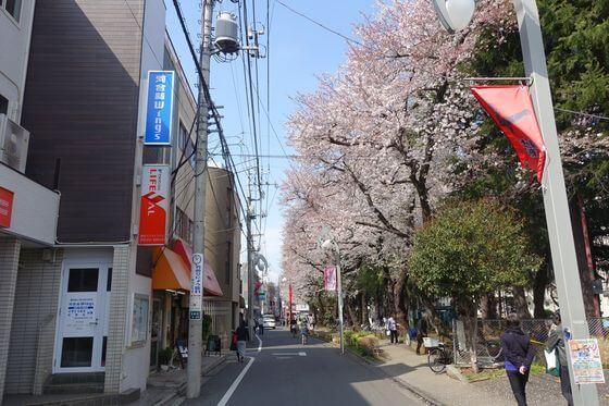 祖師谷 桜