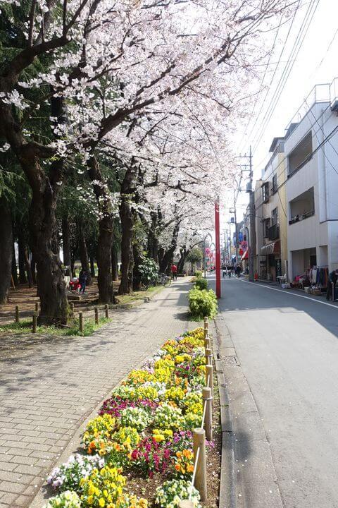 祖師ヶ谷大蔵 桜