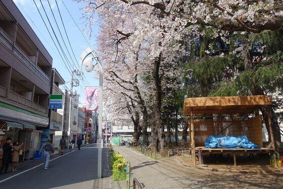 祖師谷昇進会桜まつり