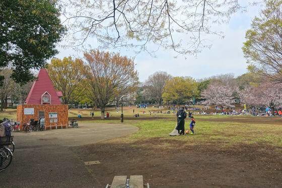 祖師谷公園 桜祭り