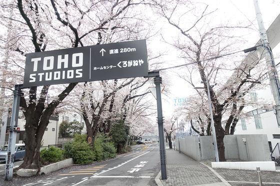 東宝スタジオ 桜並木