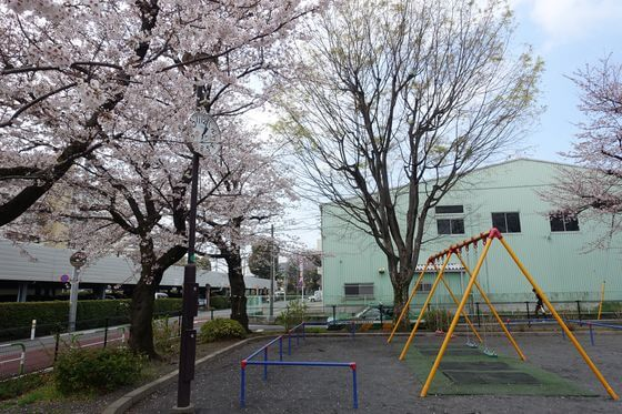 世田谷 葭根公園 桜