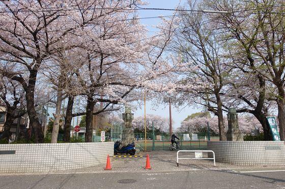 小豆沢公園 桜
