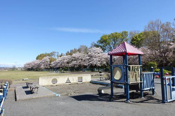 福生南公園 ちびっこ広場 桜