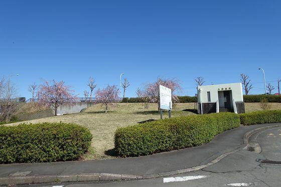 福生南公園 しだれ桜