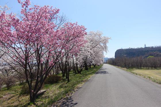 上田市 花見