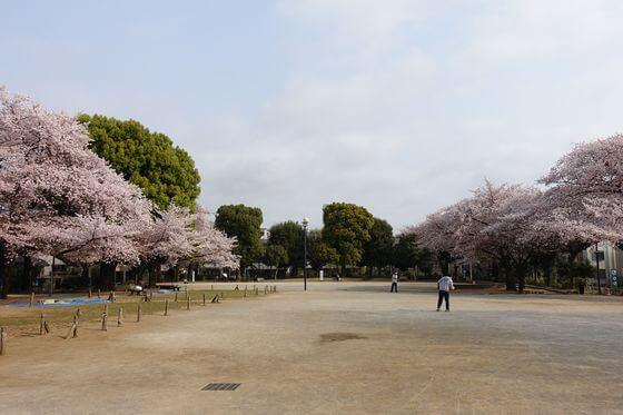板橋区平和公園 桜