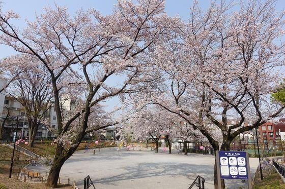 前野公園 桜