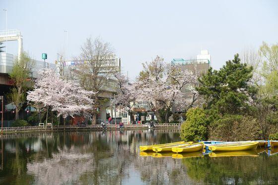 見次公園 桜