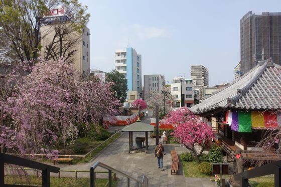 南蔵院 板橋 桜