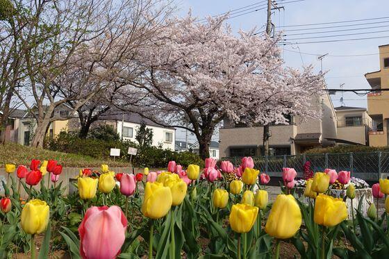西前野公園 桜