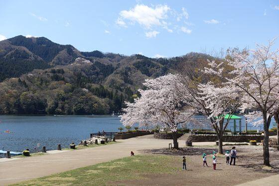 相模湖公園 桜