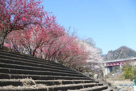 猿橋近隣公園 花桃
