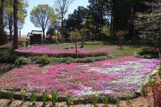 瀧之宮公園 芝桜