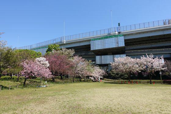 都市農業公園 芝生広場 桜