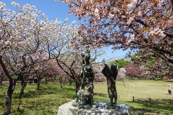 都市農業公園 五色桜まつり