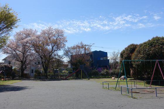睦公園 福生 桜