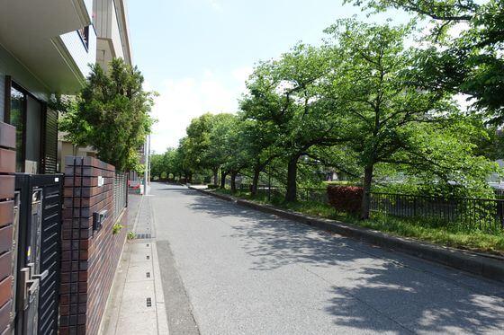 逆川緑の道