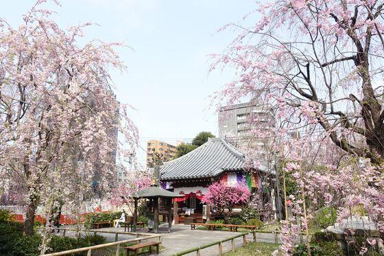 板橋区 桜