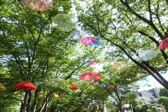 千葉公園 傘