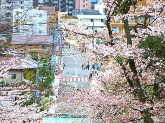 池上本門寺 大田区 桜