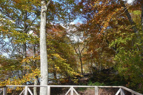 イタリア 中禅寺湖 紅葉
