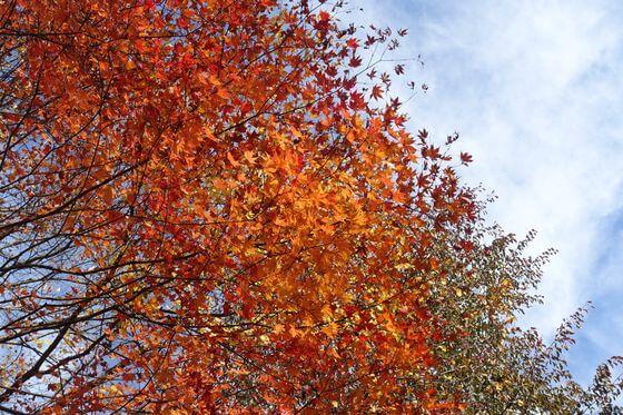 竜頭の滝 紅葉 現在