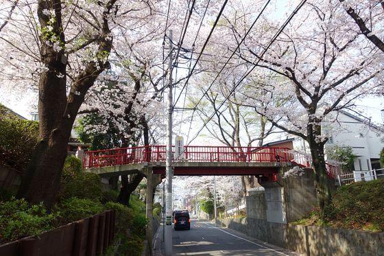 桜坂 大田区 桜