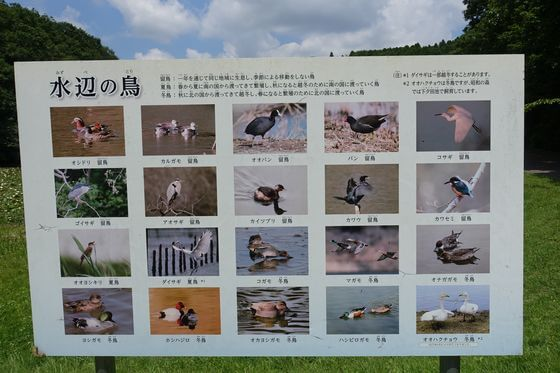 昭和の森 野鳥 種類