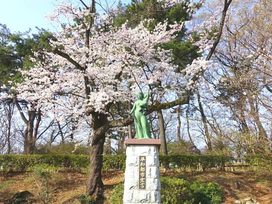 多摩川台公園 大田区 桜