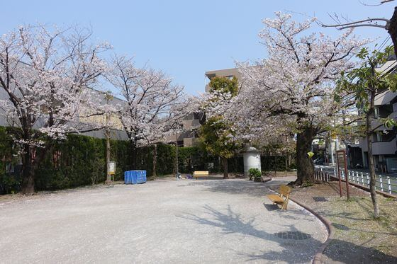 つきやま公園 大田区 桜