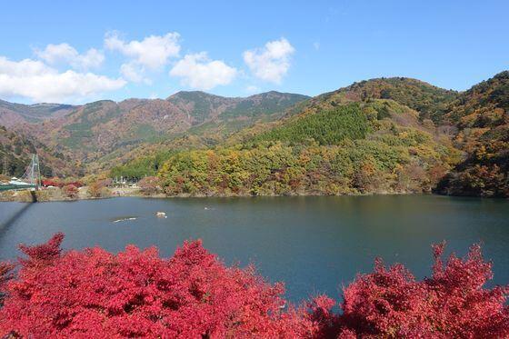 もみじ谷大吊橋 紅葉