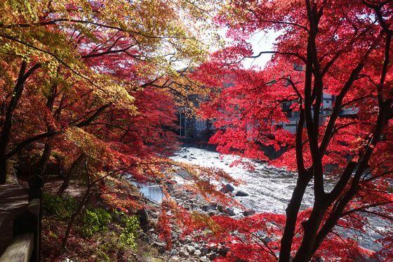 紅の吊橋 紅葉 現在