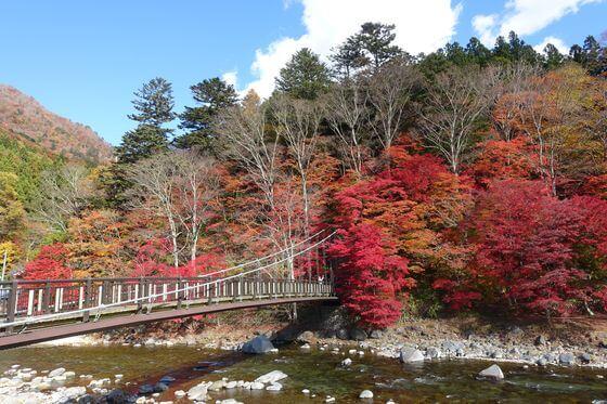 紅の吊橋 紅葉 見頃