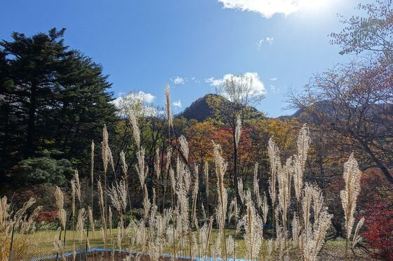 日光植物園 紅葉