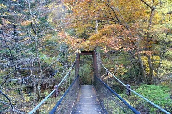 留春の吊橋 紅葉 現在