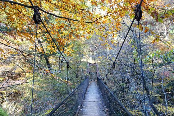 留春の吊橋 紅葉