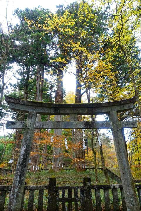 滝尾神社 三本杉