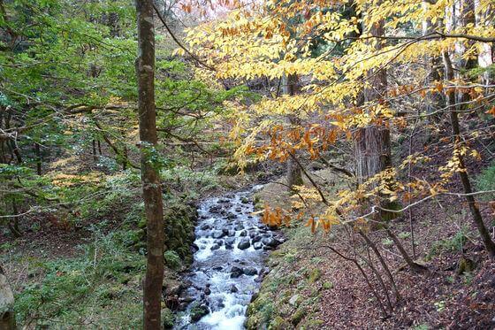 日光 滝尾神社 境内 紅葉