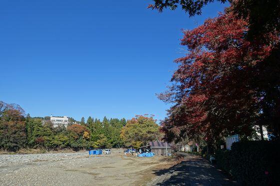 秋川橋河川公園 紅葉 見頃
