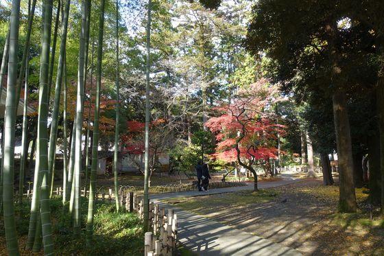 足利学校 竹林