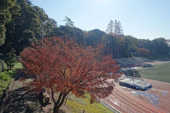 慶應日吉キャンパス 紅葉