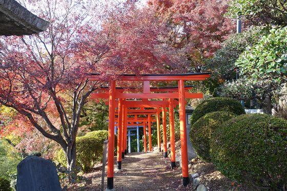 紅葉 足利織姫神社
