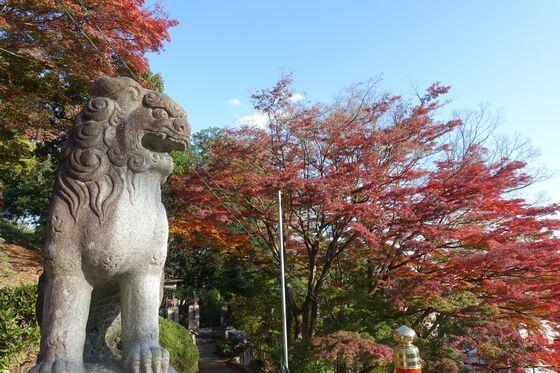 織姫神社 紅葉 見頃