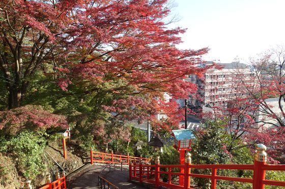 紅葉 織姫神社