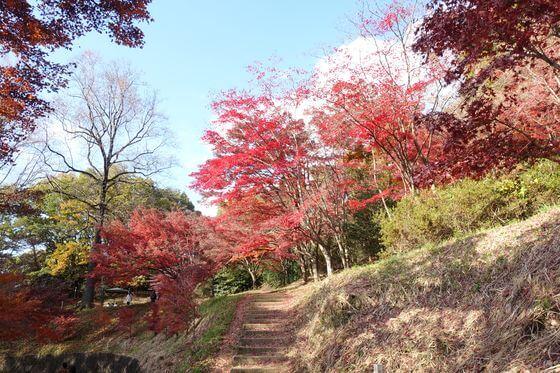 織姫公園 モミジ