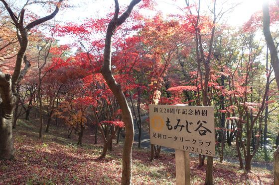 織姫公園もみじ谷 紅葉